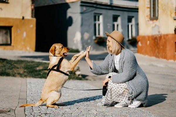 Una vez en casa, programa los paseos, para que perrito está saludable y feliz. Foto Zigmars Berzins en Pixabay