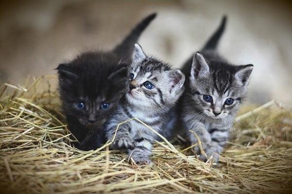 Los bebés son muy tiernos, pero sería bueno que les dieras oportunidad a un michi mayor. Foto congerdesign en Pixabay