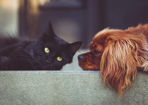 Michis y perritos pueden ser grandes amigos. Foto StockSnap en Pixabay